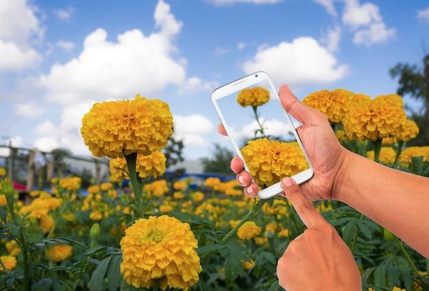 스마트 폰을 사용하여 꽃밭 사진을 찍는 남자.