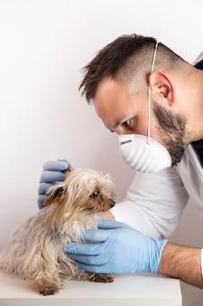 Man in vet's uniform hiding senior yorkshire terrier