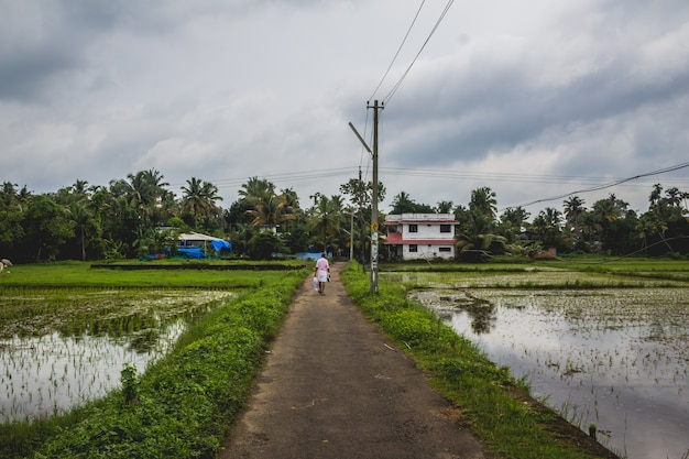 Man walking along a long road back to his home with rice fields on both sides