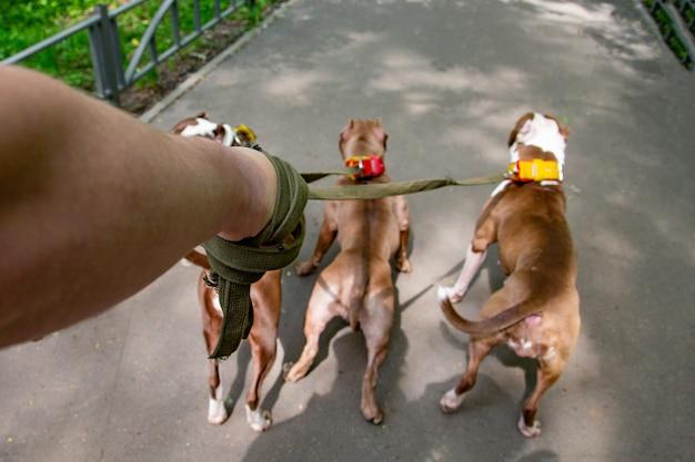 Человек гуляет с собаками в парке
