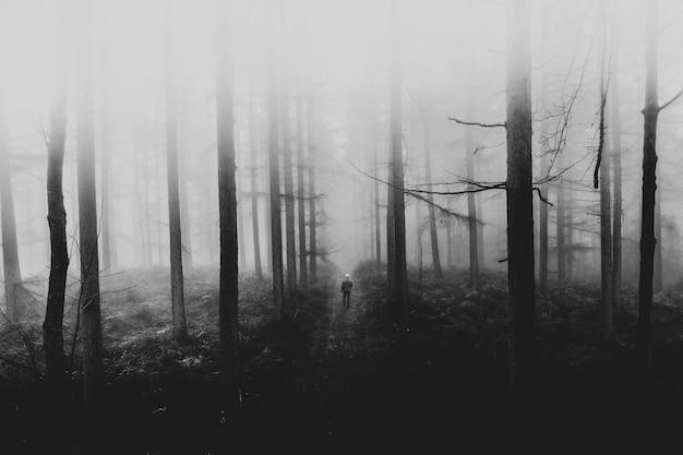 霧の森の中を歩く男