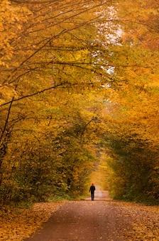 자연 경로를 걷는 남자. 가 공원에서 산책하는 젊은 남자. 가을 석양에 저녁에도. 가을 숲으로가는 길에 한 남자.