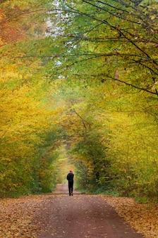 自然な道を歩いている男。秋の公園を歩いている若い男。秋の夕焼けの夕方の道。秋の森に向かう途中の一人の男。