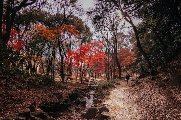Человек идет через парк момидзи в токио