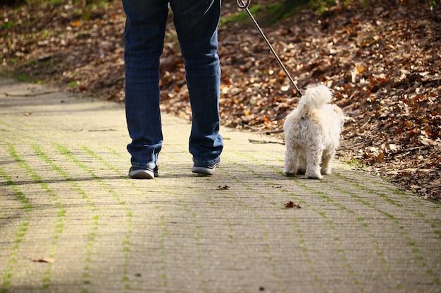 낮에는 햇빛 아래 공원에서 흰색 강아지와 함께 산책하는 남자