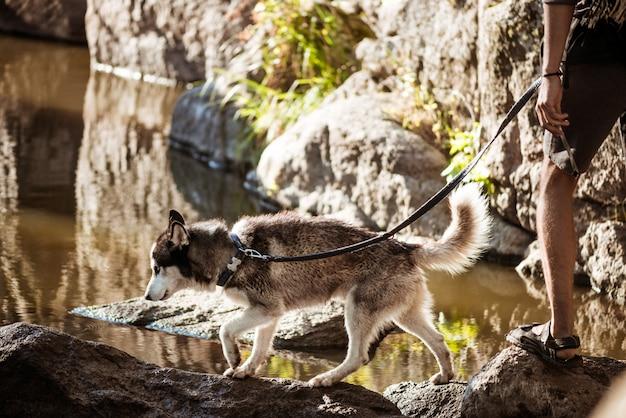 水の近くの峡谷でハスキー犬と歩く男