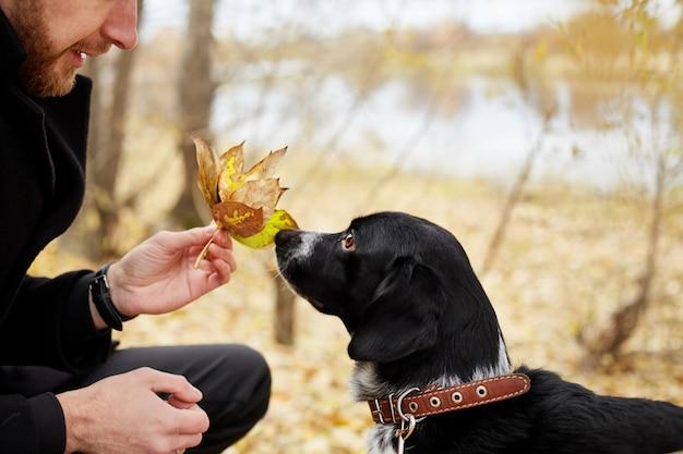 Man walks in the fall with dog spaniel autumn park