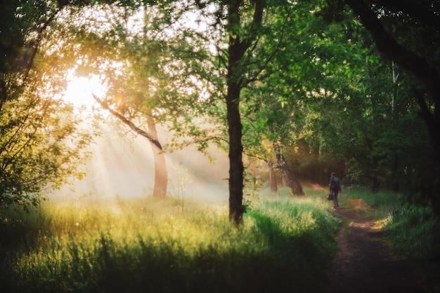 男は朝の日差しの中で公園を散歩します。日の出の男の後ろ姿。太陽光線とレンズフレア、コピースペース付き。ぼやけた日当たりの良い背景。明るい太陽が木の葉を通して夕日に輝いています。ぼやけた背景