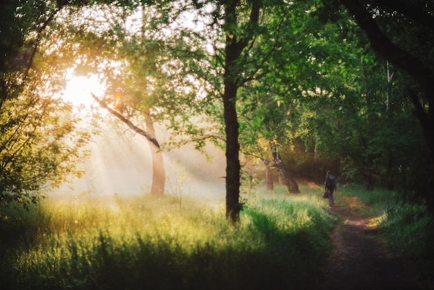 Man walks in park in morning sunlight. back view on man on sunrise. sunbeams and lens flare with copy space. blurry sunny background. bright sun shines through trees leaves on sunset. blurred backdrop