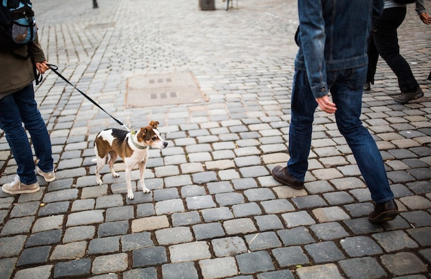 남자는 도심에서 강아지와 함께 산책. 아름다운 눈을 가진 외로운 개는 독일의 광장에서 행인을 본다