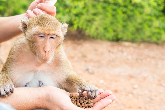 A man was feeding the monkeys