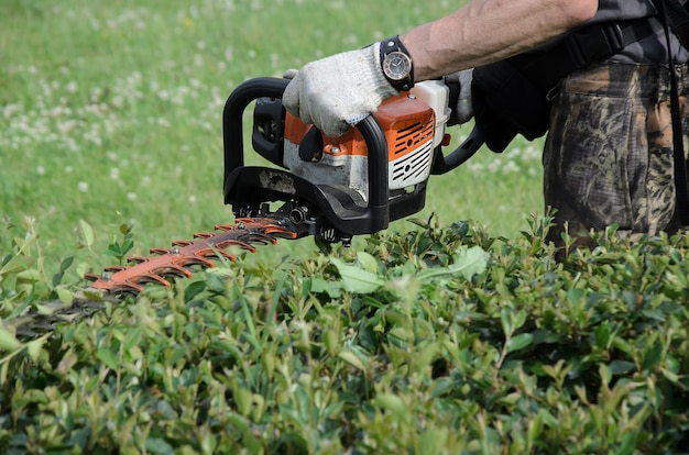 Man in white work gloves trims the hedges with an electric hedges trimmer