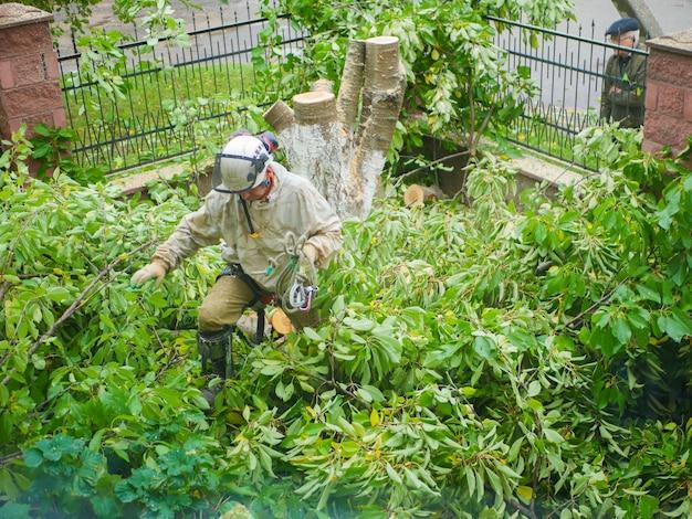 葉にチェーンソーを持つ男。ログを通って別のオブジェクトに忍び込みます