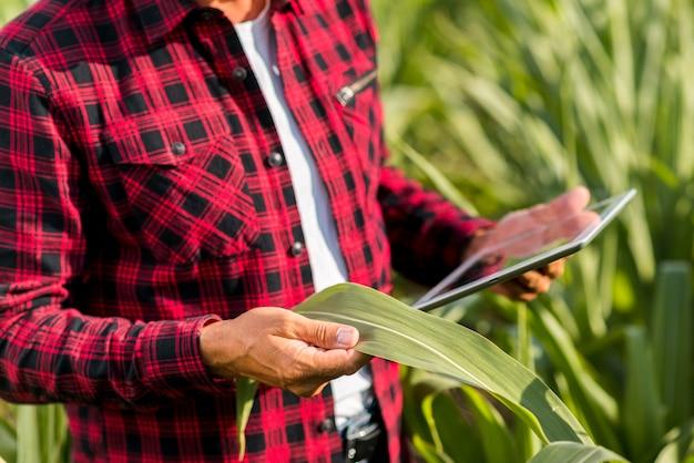 トウモロコシ畑でタブレットを持つ男