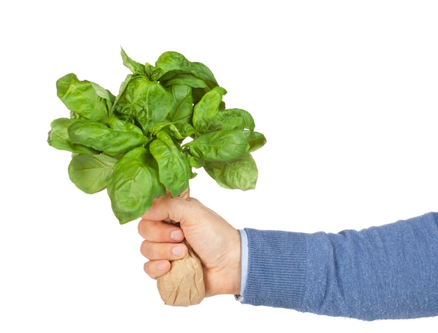 Man with basil bouquet in hand  isolated on white wall.