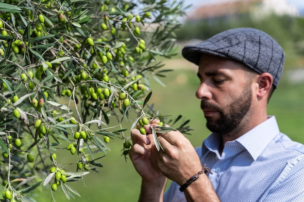 Man with a beret picking green olives from a tree
