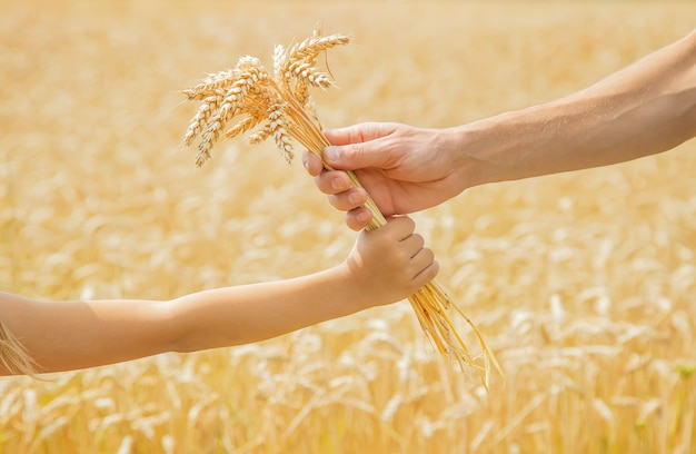 A man with a child holds spikelets of wheat in his hands.