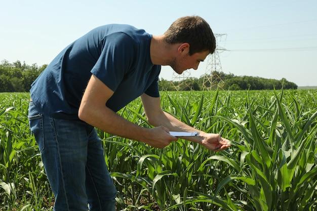 トウモロコシ畑でクリップボードを持つ男。農業事業