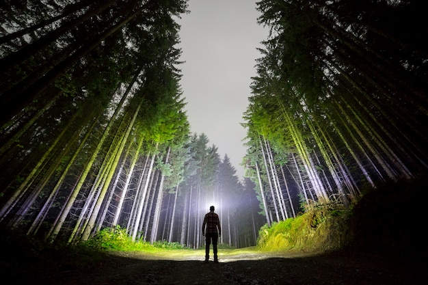 Man with head flashlight standing on forest road among tall fir-trees under dark blue night sky.
