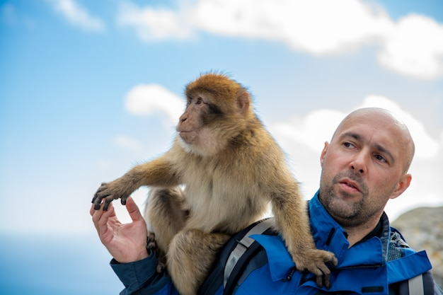 A man with a monkey macaca sylvanus on his shoulder in gibraltar wildlife sanctuary