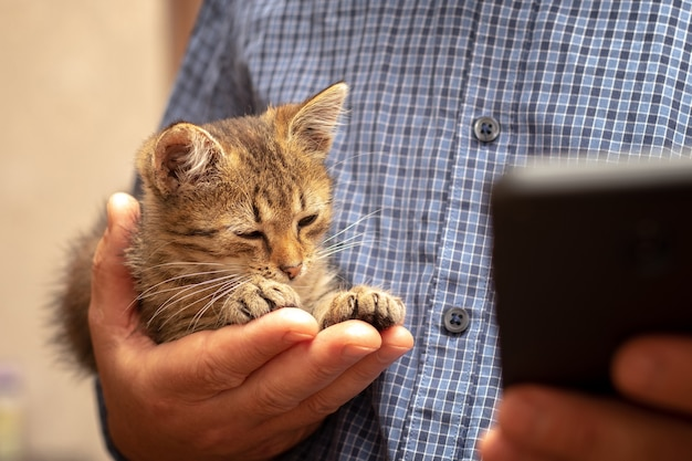 A man with a phone in his hand holds a small cute kitten in his other hand