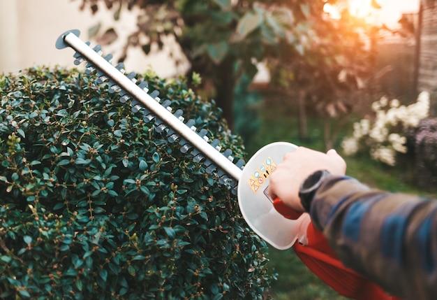 茂みのためのハサミを持つ男は庭で茂みを栽培します Premium写真