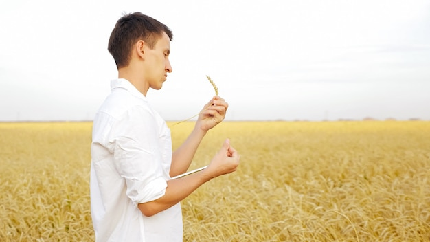 Man with tablet and ear of ripe wheat in the field