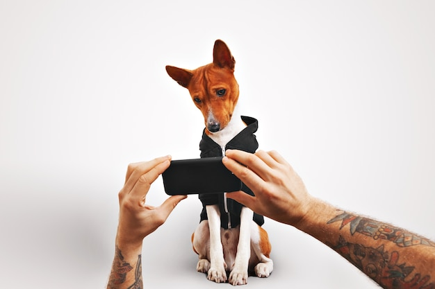 A man with tattooed arms shows a video on a smartphone to his brown and white basenji dog