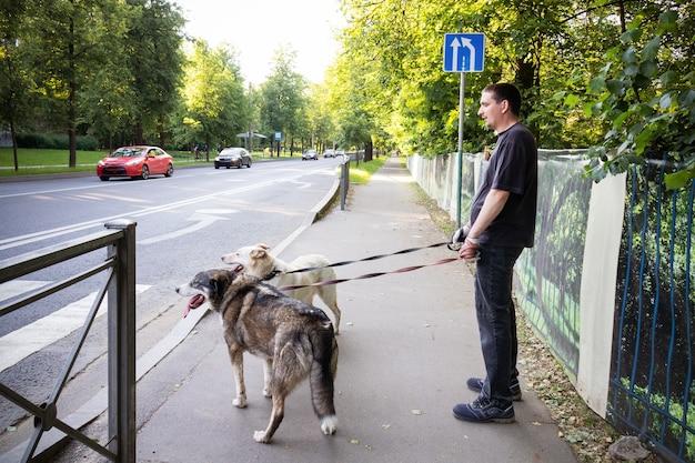 夏の通りの横断歩道に立っているひもにつないで2匹の犬を持つ男。