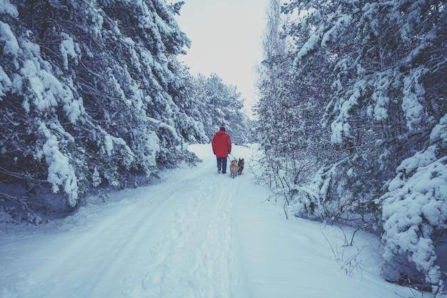 Мужчина с двумя собаками идет по дороге в заснеженном лесу зимой