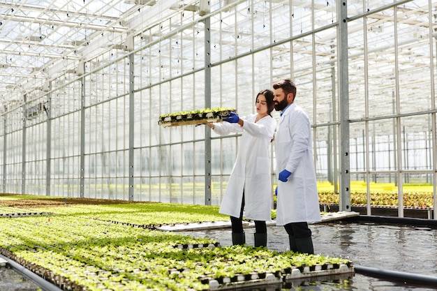 Man and woman in laboratory robes work with green plants in a greenhouse