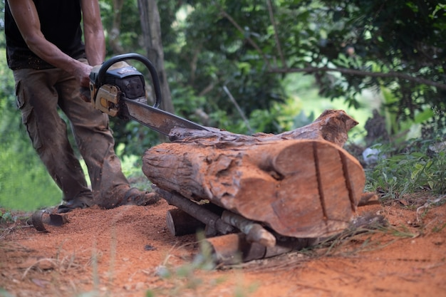 A man woodcutter saws tree stump with the old chainsaw