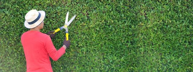 庭で働く男は、朝自宅で装飾用の木の剪定