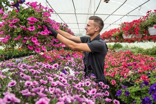 花でいっぱいの日当たりの良いオレンジリーで働く男は、産業温室内の植物の状態をチェックします