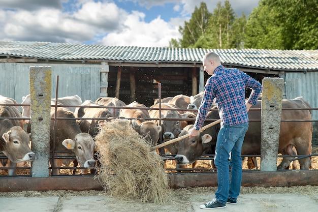 Человек, работающий на ферме крупного рогатого скота в солнечный день
