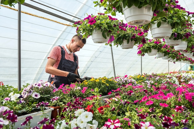 Man working in sunny orangery full of flowers  check the condition of plants in industrial greenhouse