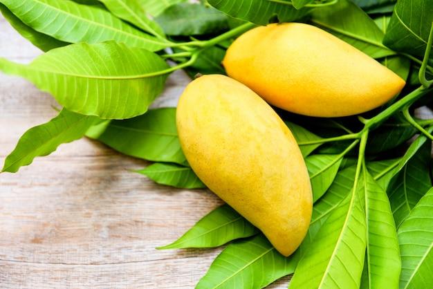 Свежий манго на листьях манго из дерева концепция тропических летних фруктов - сладкие спелые манго желтый