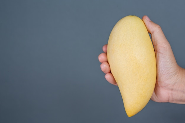 Mango handle on gray background.