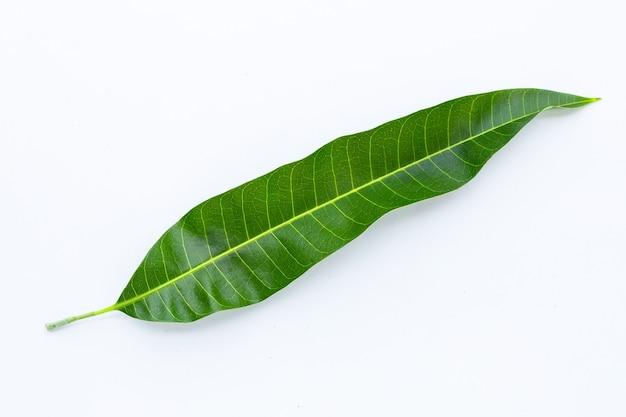 Mango leaf on white background.