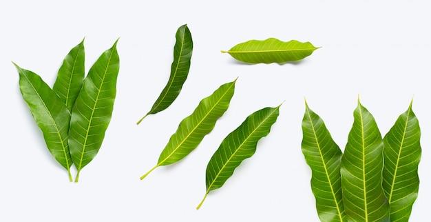 白い背景の上のマンゴーの葉