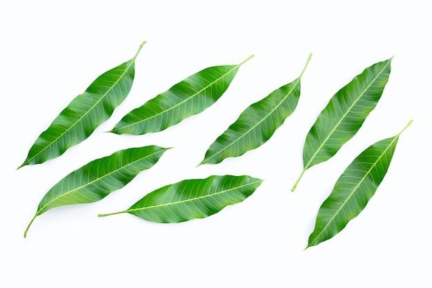 白い表面にマンゴーの葉