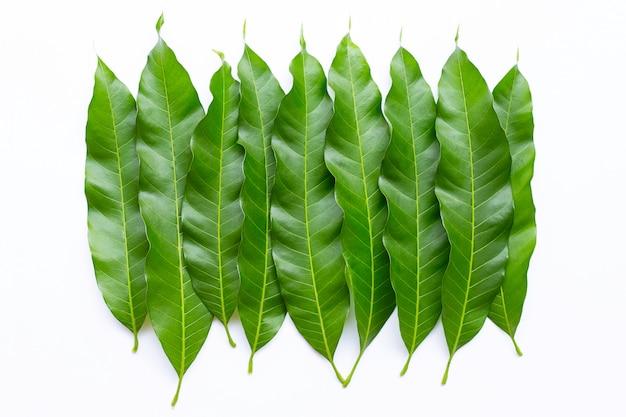 Mango leaves on white background.