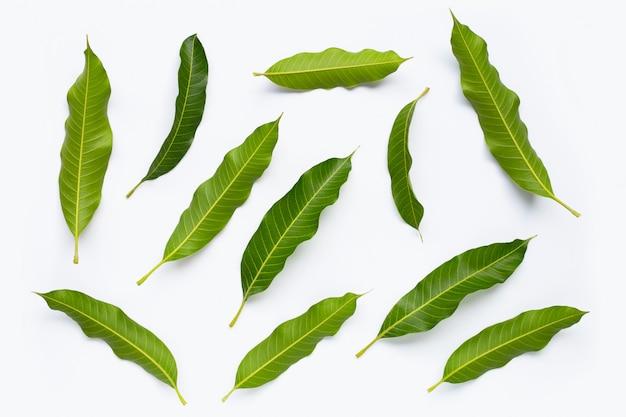 Mango leaves on white