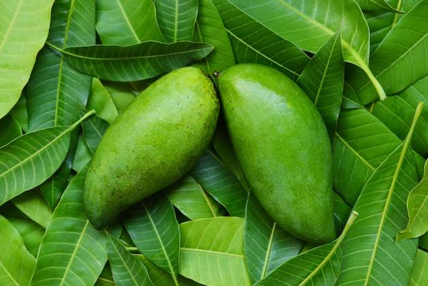 トロピカルサマーフルーツコンセプトの緑の葉のマンゴー/フレッシュグリーンマンゴー