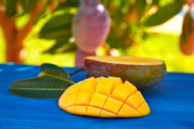 Mango tree with prepared mango fruit