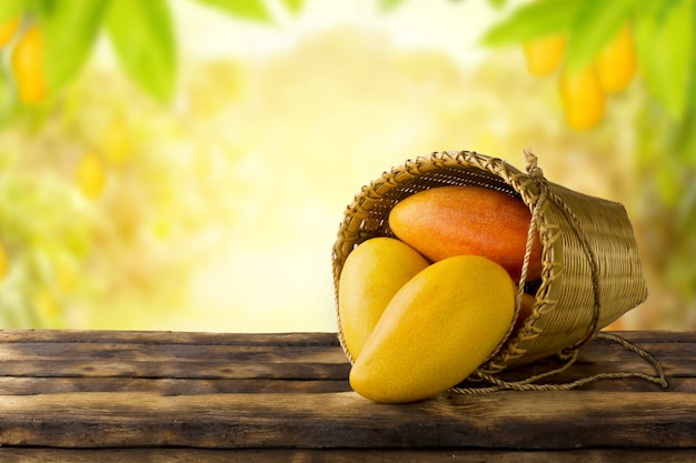 Mango tropical fruit in basket on wooden table with farm background