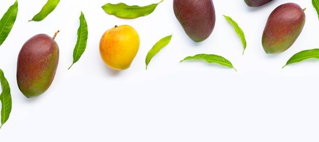망고, 흰색 바탕에 잎이 있는 열대 과일.