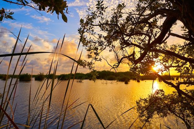 리비에라 마야에서 mangroove 일몰