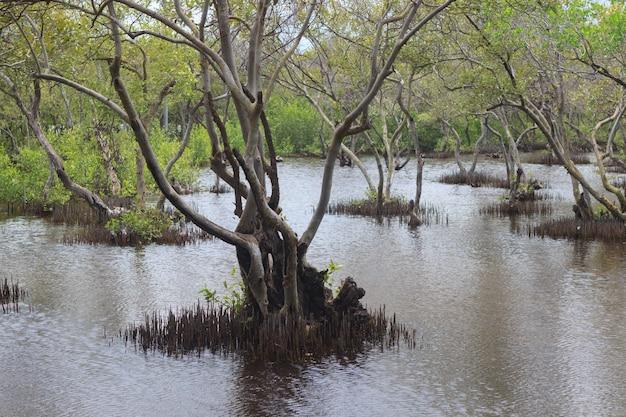 インドネシアのギリメノ島内の塩湖にあるマングローブ林