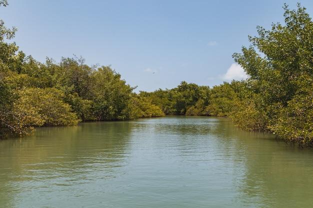 Mangrove photo. mangrove. crab breeding
